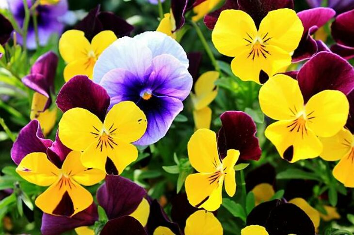Colorful Flowers to Plant In the Fall