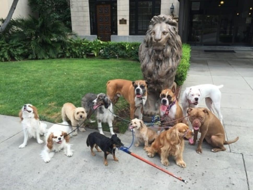 dogs of many breeds sit in front of a stone lion against green grass and shrubs