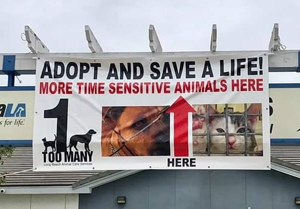 """Banner pointing the way to the shelter, with the One Too Many sign on the left. Banner says """"Adopt and Save a Life--More Time Sensitive Animals Here."""""""