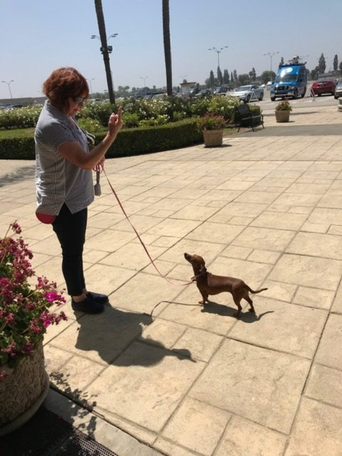 red-haired woman with reddish dachshund on pink brick.