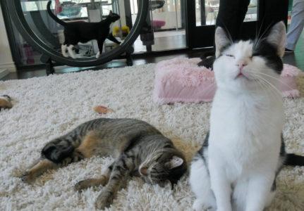 Feline Good Social Club finally open for business—and pleasure - Long Beach Post
