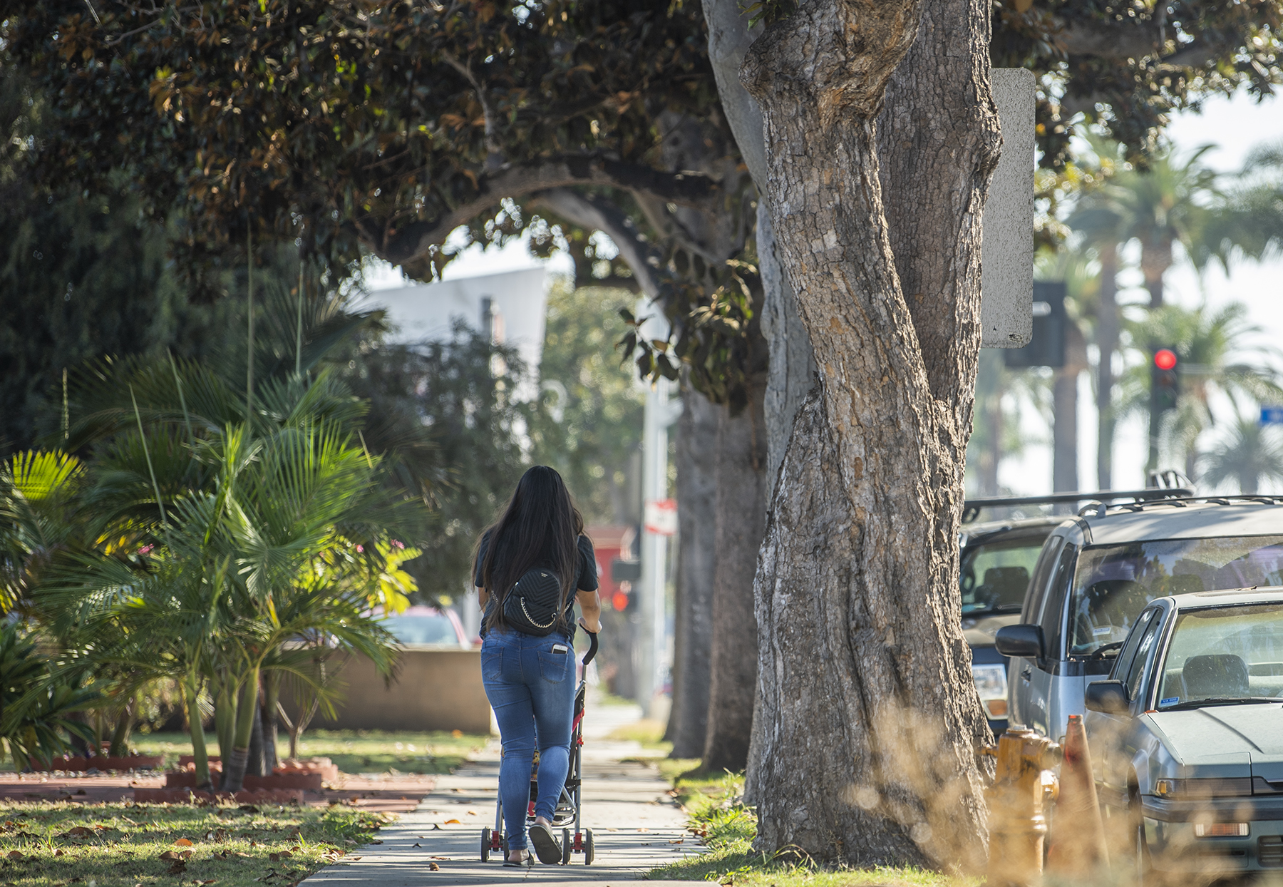 Long Beach magnolias could be doomed without proper care