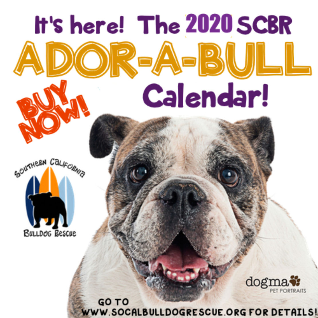 The front page of the Ador-a-Bull bulldog calendar, wtih a tan-and-white bulldog face and to his left, black, orange and blue surfboards with a black dog's silhouette in front.