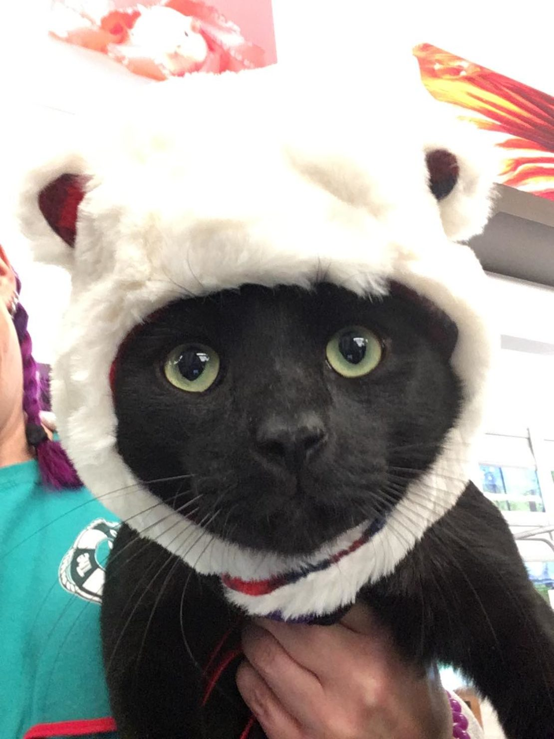 Black cat with a silly polar bear hat on. His face with its green eyes shows.