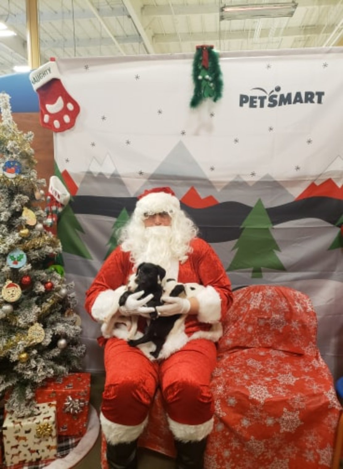 Santa Clauds holds a black puppy and a black-and-white puppy on his lap. A Christmas tree is on his right.
