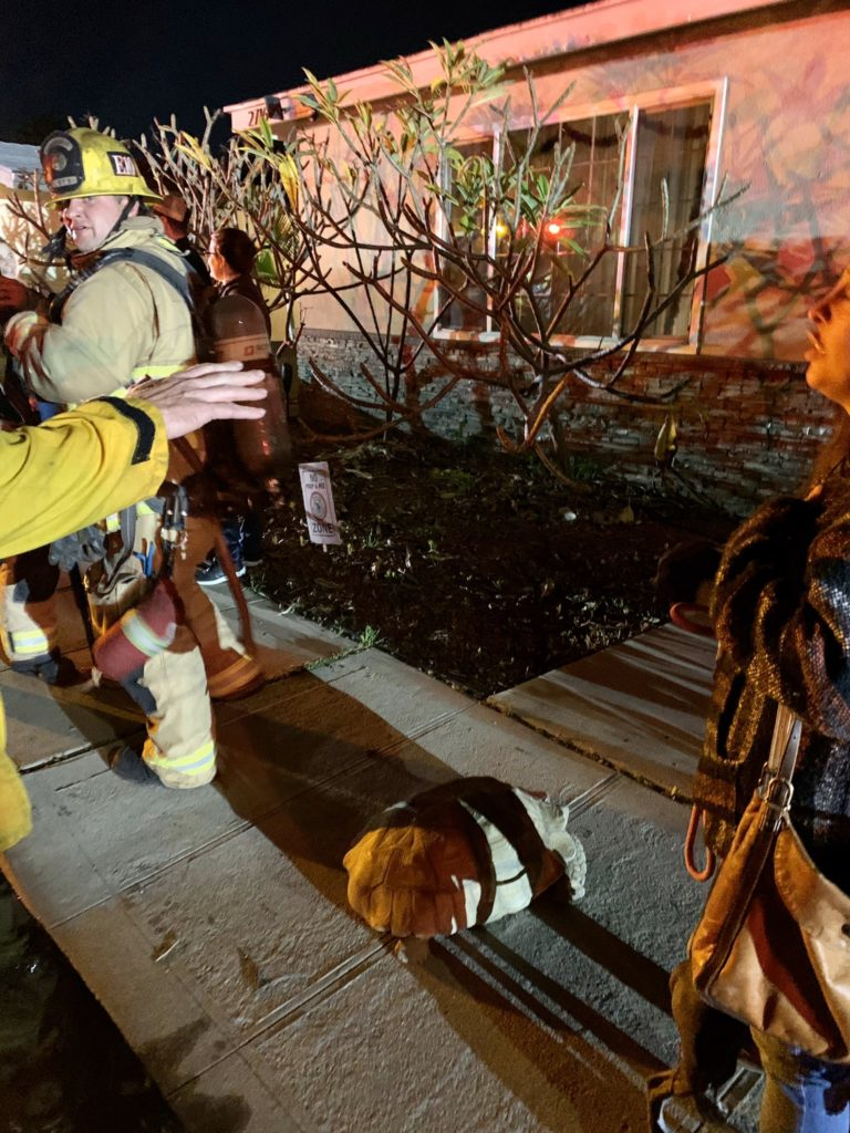 A tortoise on the sidewalk outside a home where firefighters doused flames Tuesday night. Photo courtesy the LBFD.