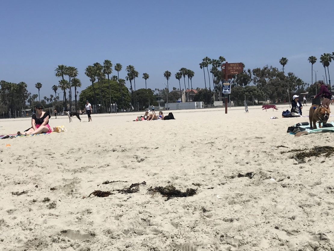 several people and one dog stay at least 6 feet apart on a large expanse of beach.