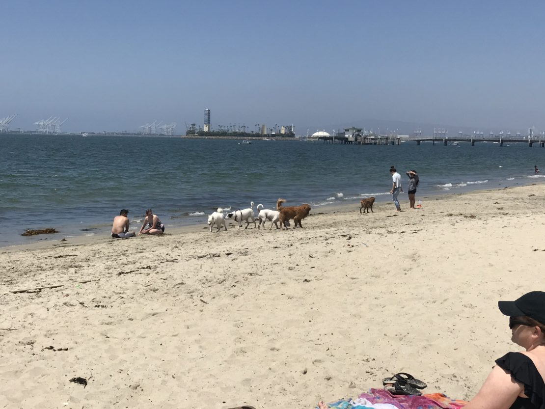 dogs and humans crowd at the shore