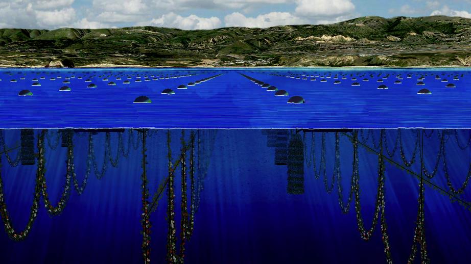 openwatershellfishfarm