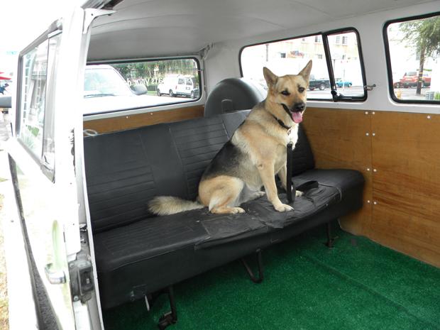 Bravo on seat
