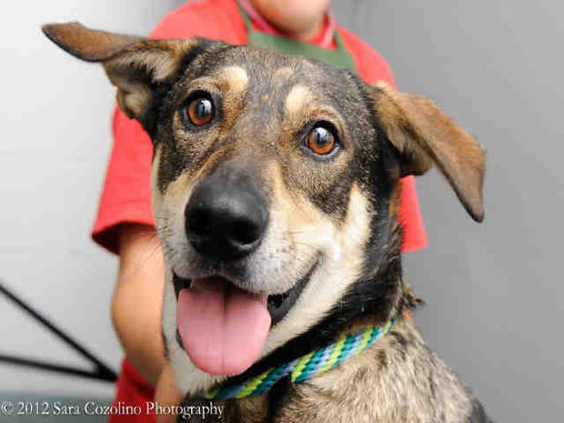 Fred Astaire SEpt. 12 Pet of the WEek