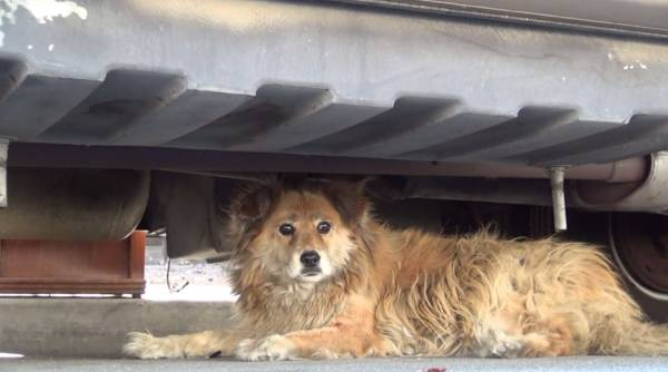 hope-for-paws-sonya-under-rv 0