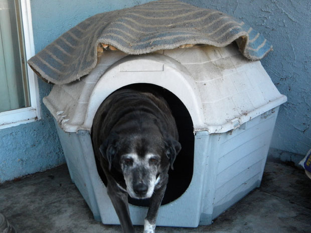 buddy in his house