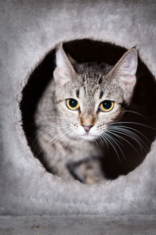 Get Cat Fix Mobile Clinic