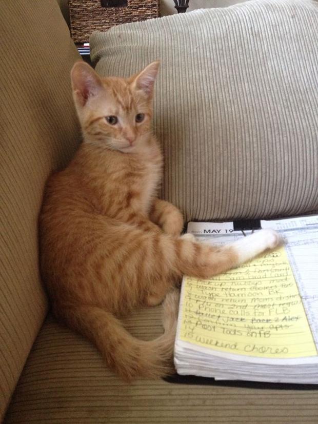 Pattys silly orange cat