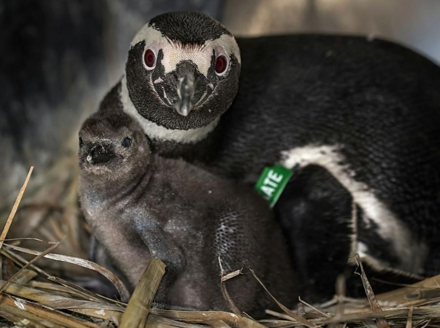 Penguins02
