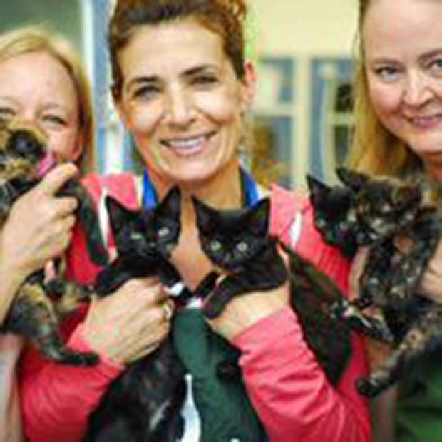 Volunteers and a kindle of kittens