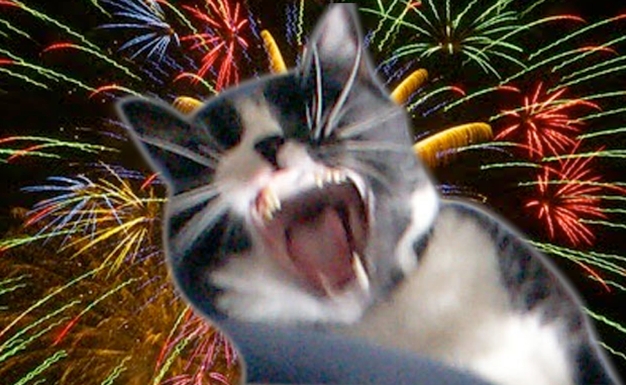 Influx of Runaway Pets After Fireworks