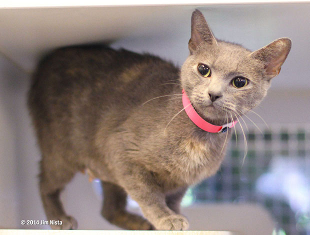 A527705 Izzy 4 years old