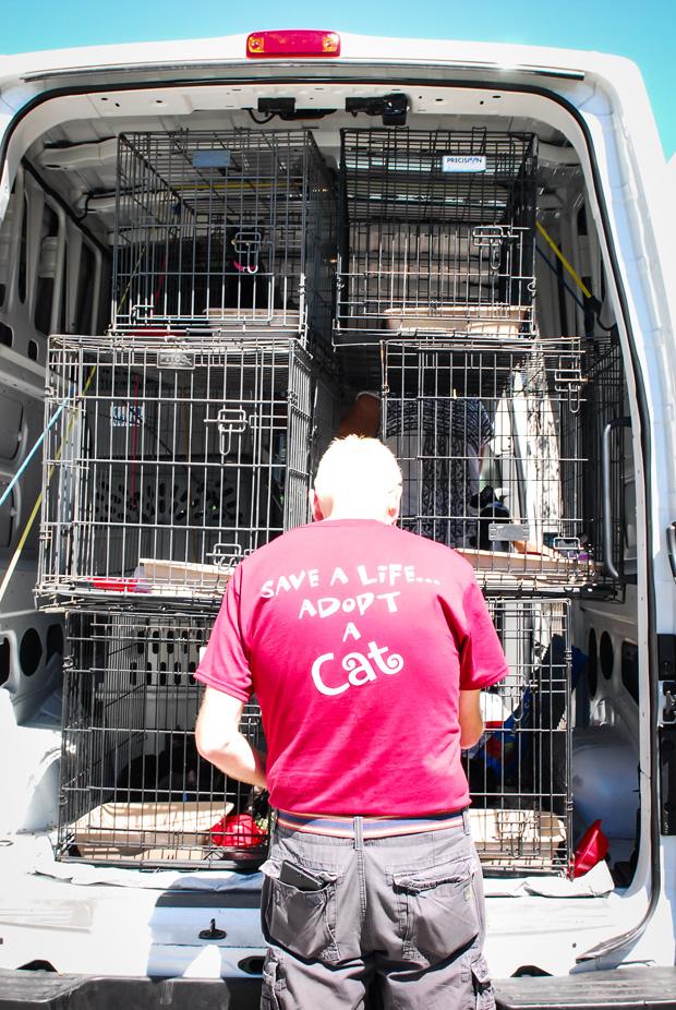 Save a life. adopt a cat