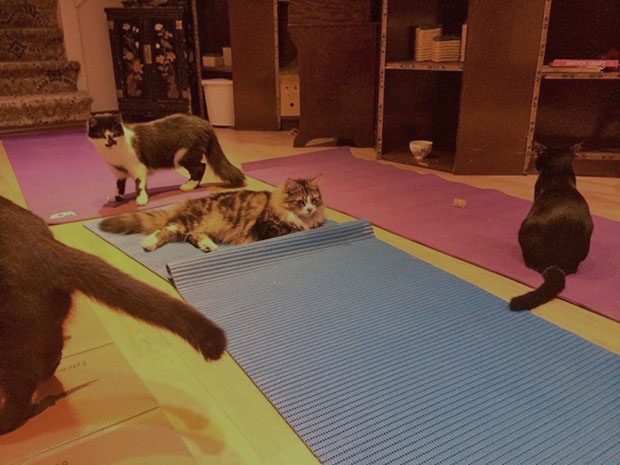 multi cat yoga mats 1024x1024Lady Dinahs