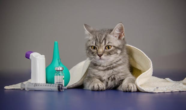 Best Food For Asthmatic Cats
