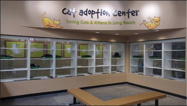 Cat Adoption Center