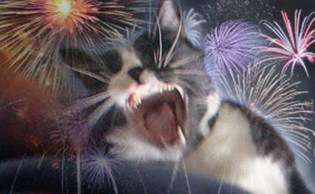 cat-fireworks
