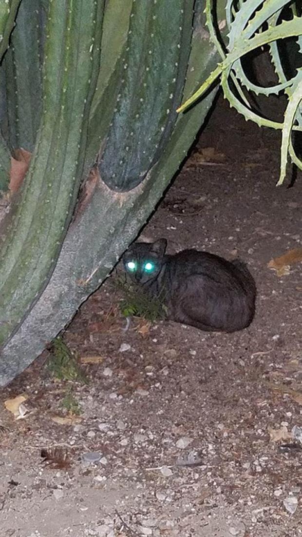 Cactus Cat Jaden