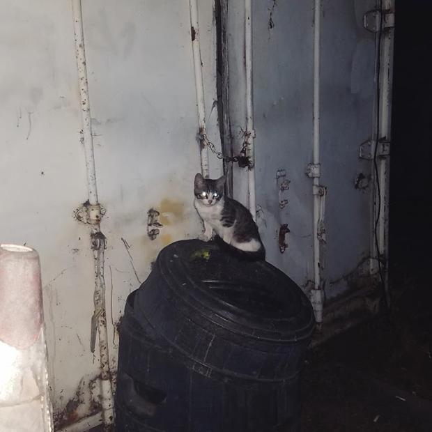 Jaden cat on can
