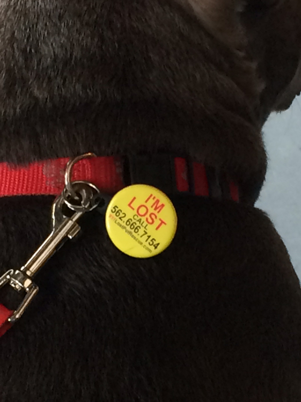 Larrys Find Rover pet tag