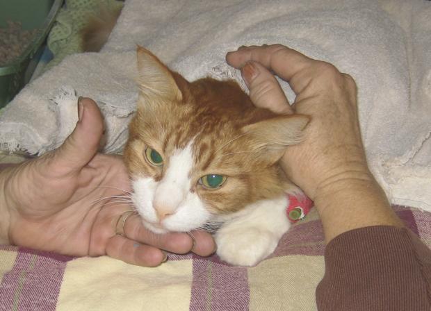 Unvaccinated Kitten Around Other Cats
