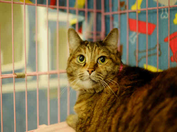 Kitty May 20 Pet of the Week
