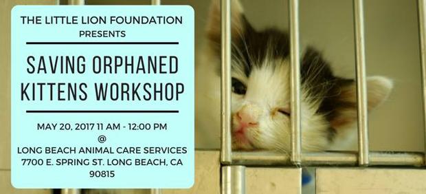 SAving Orphaned Kittens