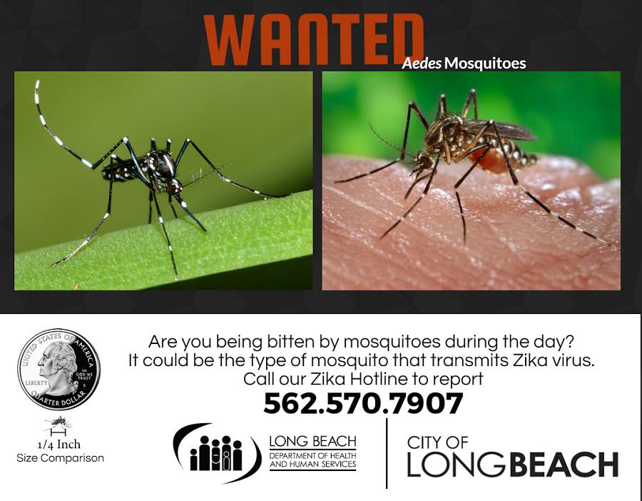 zika wanted