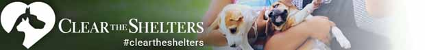 cleartheshelters feature header1