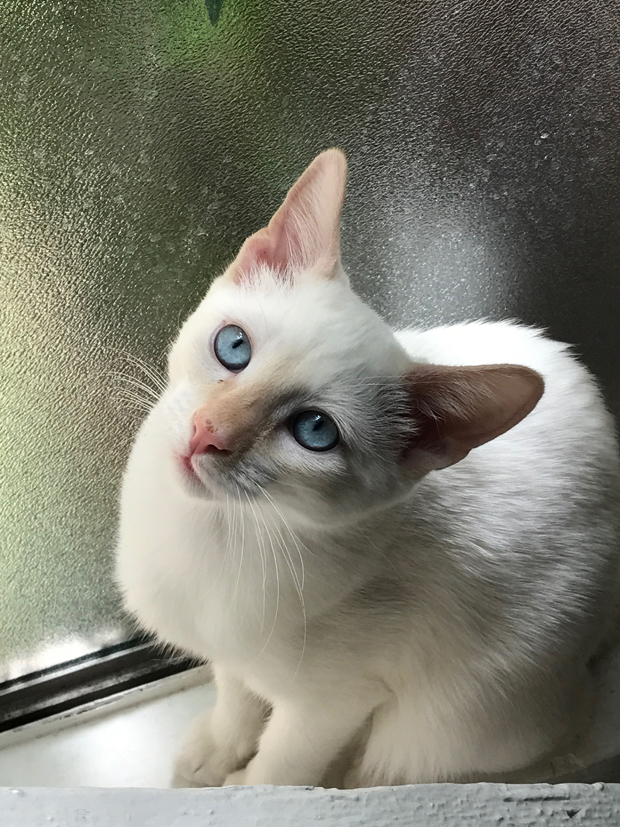 LOKI in the window