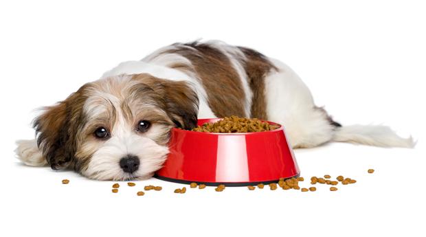 dog wont eat