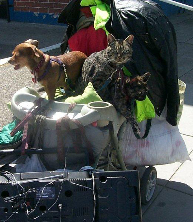 Pets of teh Homeless