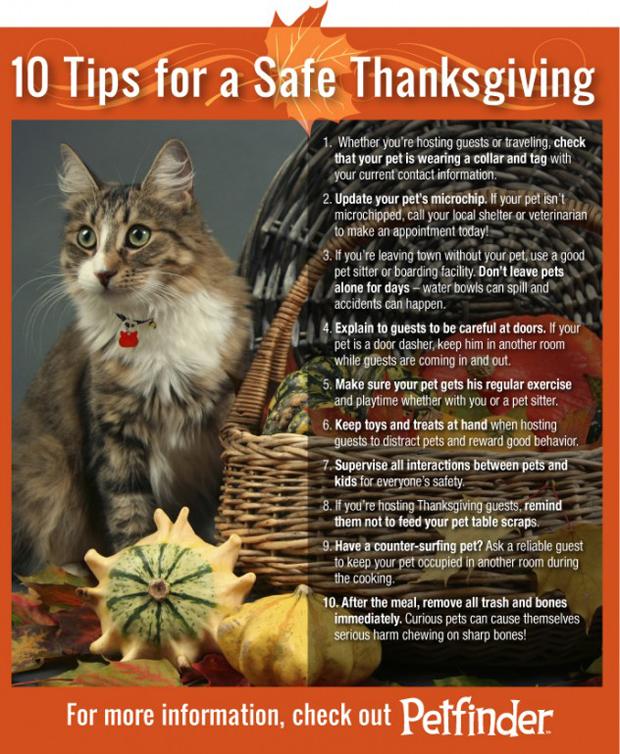 cat-thanksgiving-10-tips-632x769