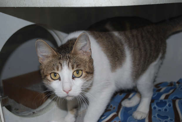 Adopting Cat That Has Been In Shelter Long Time