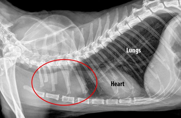 lungmass