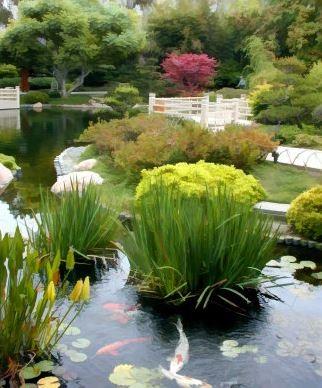 Csulb S Earl Burns Miller Japanese Garden To Start