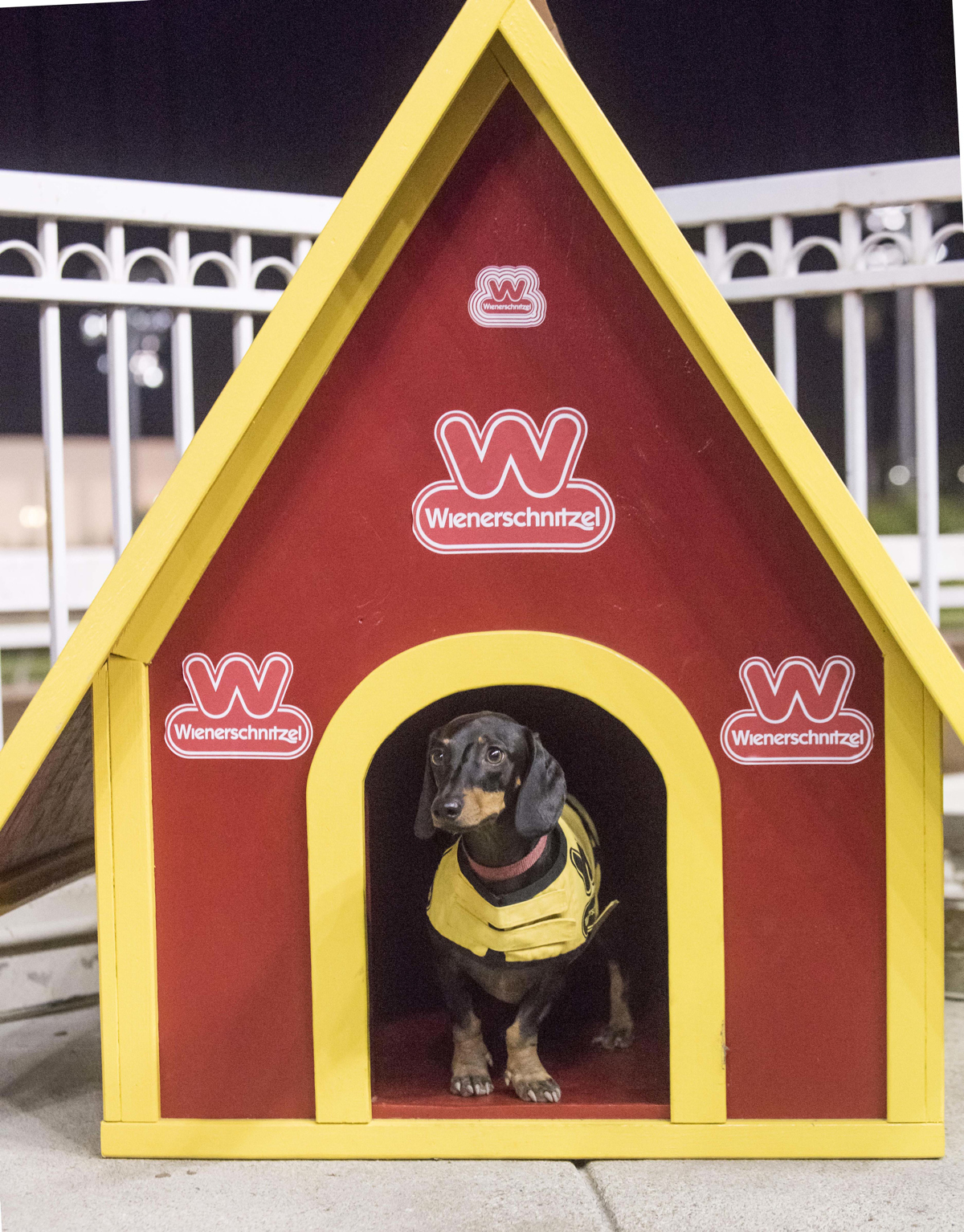 2018 Wiener Nationals (small) - Another dog house for the now two-time winner Baby Bo