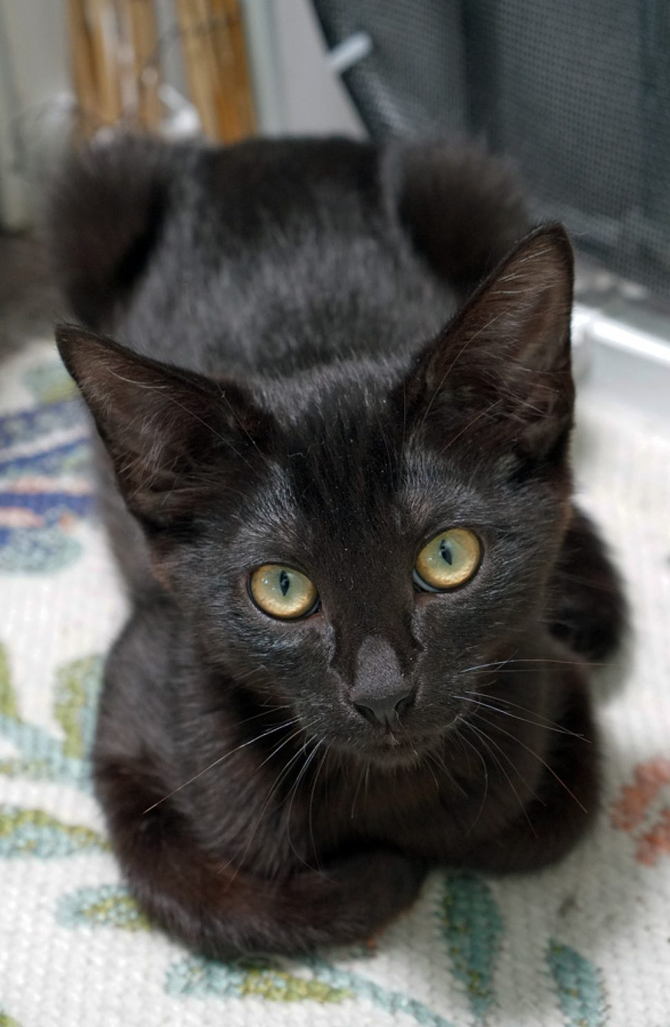 eee11a745b96a1 Baldwin insisted on a headshot–he wants to be the next Pyewacket in your  palace.