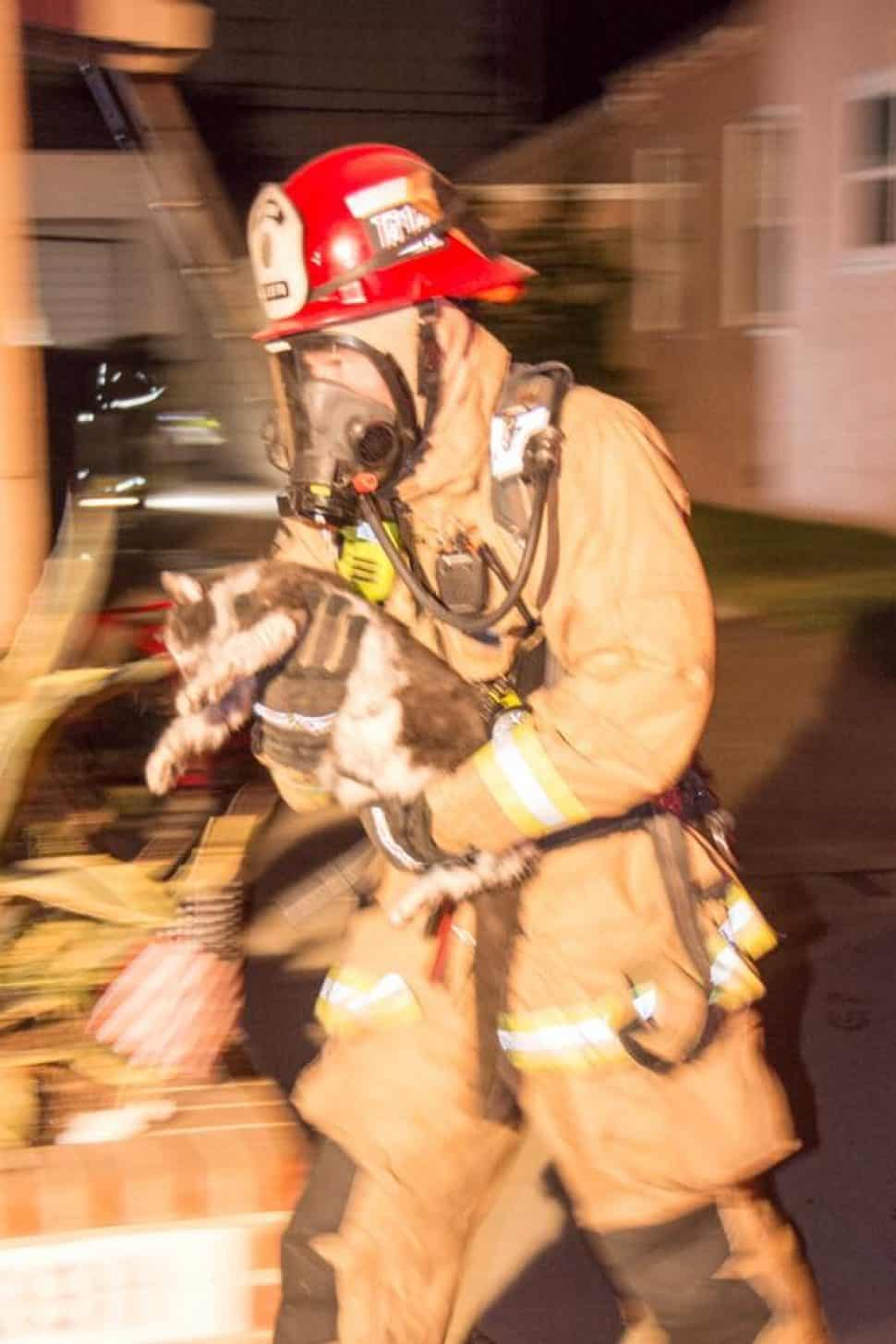Firefighters rescued a cat from a blaze near the Traffic Circle in Long Beach on the morning of Tuesday, Sept. 11, 2018. Photo courtesy the Long Beach Fire Department.