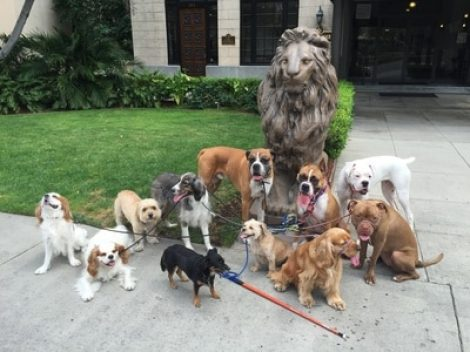 SpcaLA animal behaviorist to present Friday in Tennessee; goal is adoptability of shelter dogs - Long Beach Post 2