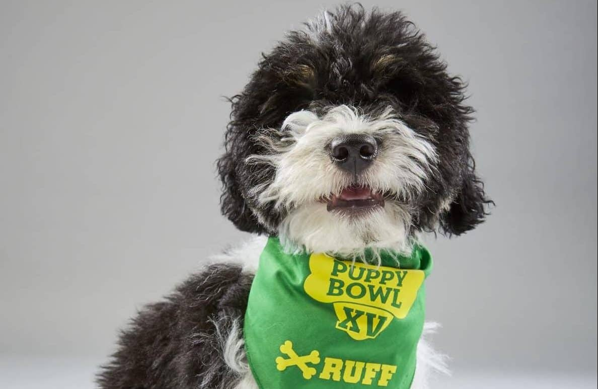 Team Ruff Defeats Team Fluff in Puppy Bowl XV