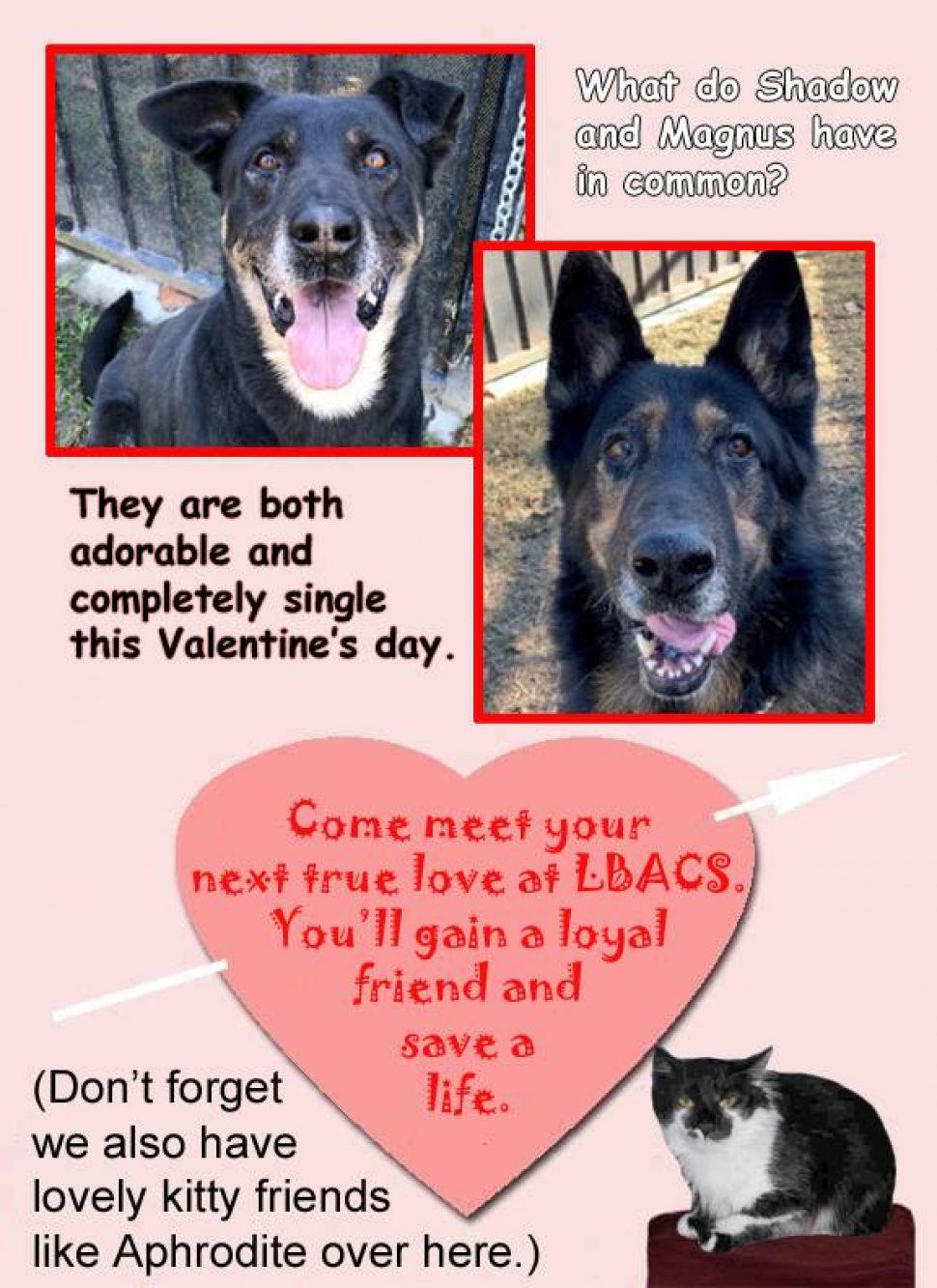 Two photos of big dogs--one a Rottwieler mix and the other a German shepherd, and a gray-and-white cat with a gray, splotchy mask talking about finding your match at the shelter.