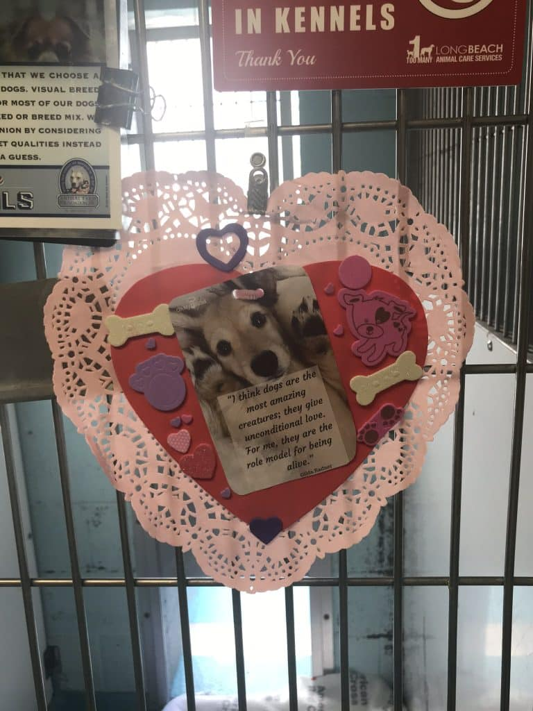 """photo of a dog with cut-out bones on a heart pasted on a doily, with """"I think dogs are the most amazing creatures; they give unconditional love. For me, they are the role model for being alive."""
